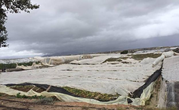 invernaderos arrasados por tornado